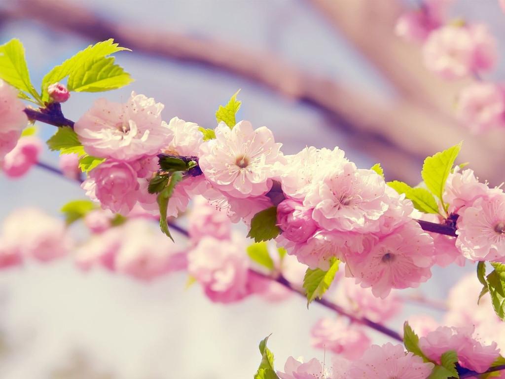 Hd обои весна 1024x768 обои hd весенние картинки 1024х768 скачать.