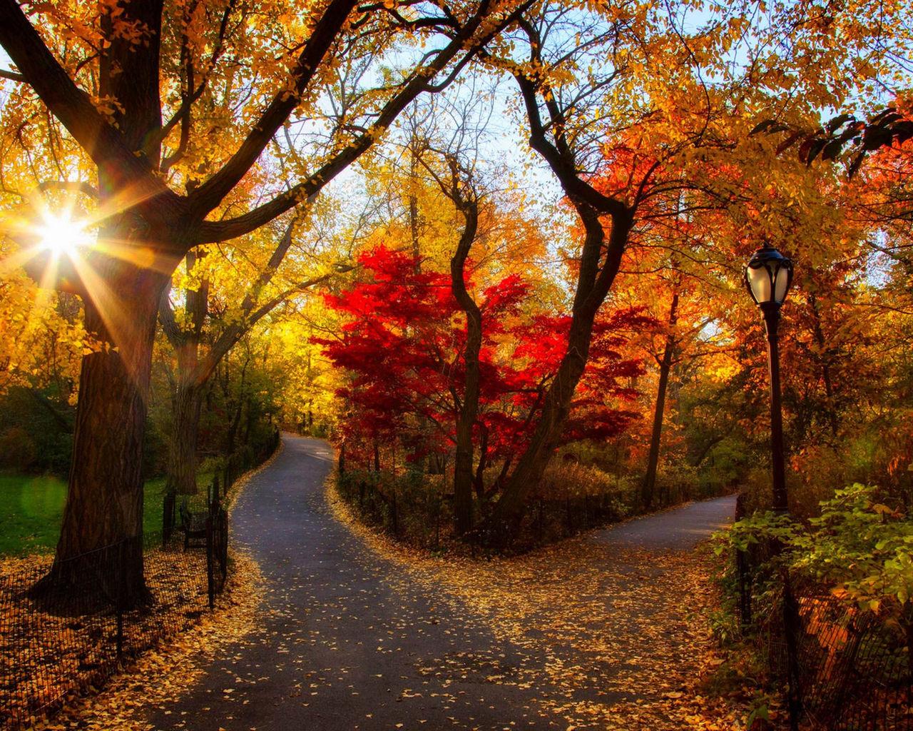 Обои осень. Природа foto 9