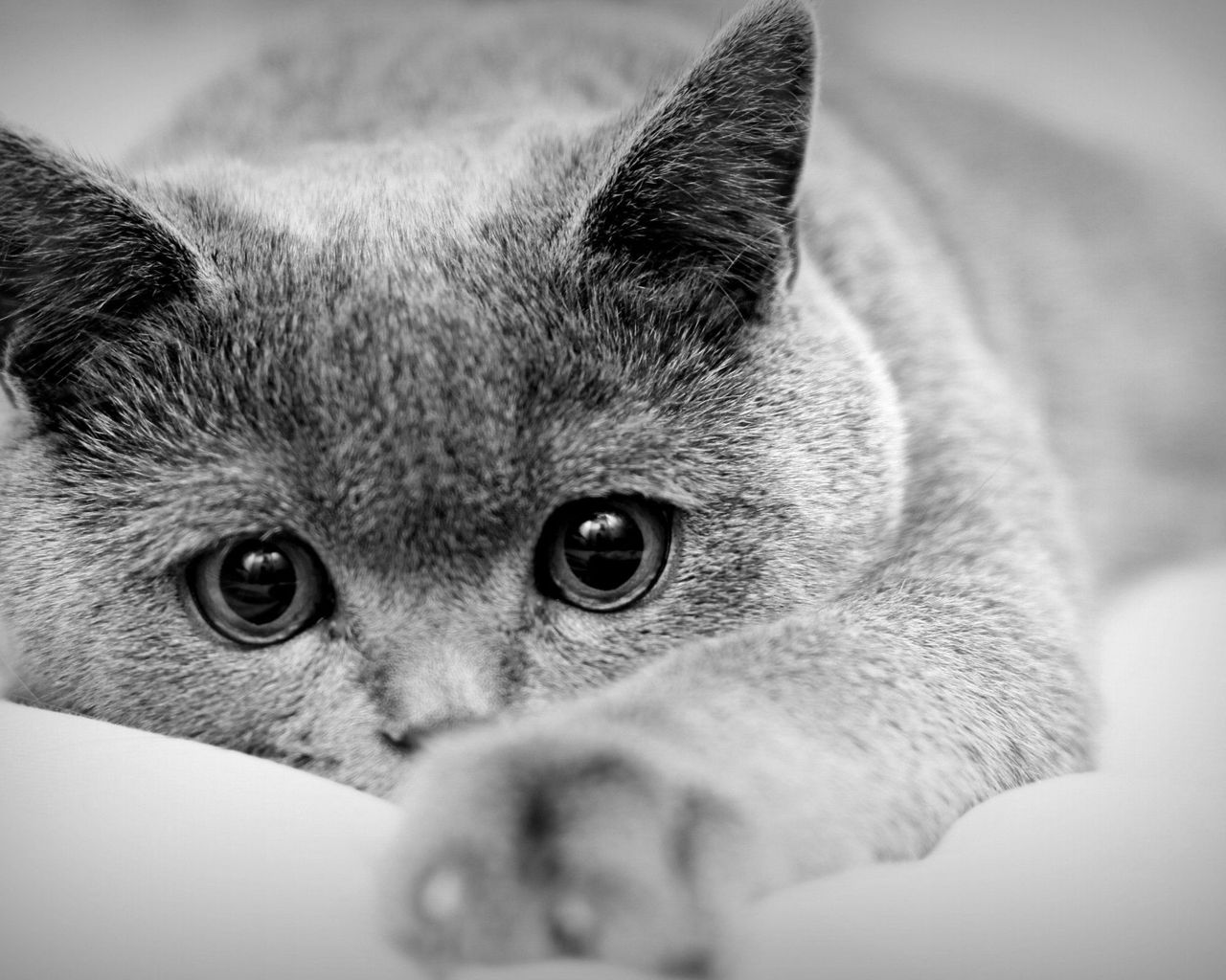 картинки на заставку кошки