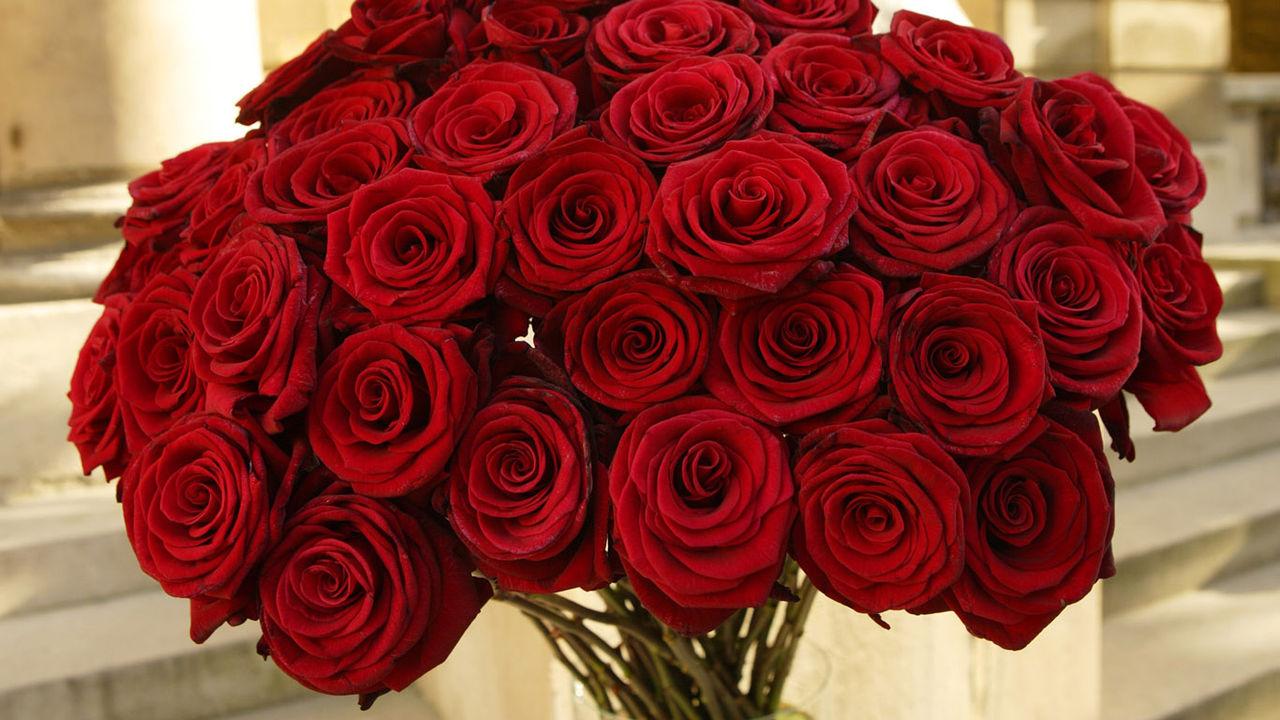 Красные Розы Обои На Рабочий Стол