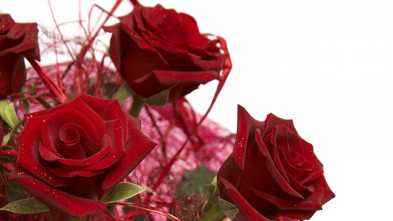 Плейкаст красные розовые белые желтые цветы и розы большие открытки