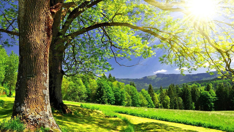 Картинки летней природы для рабочего стола