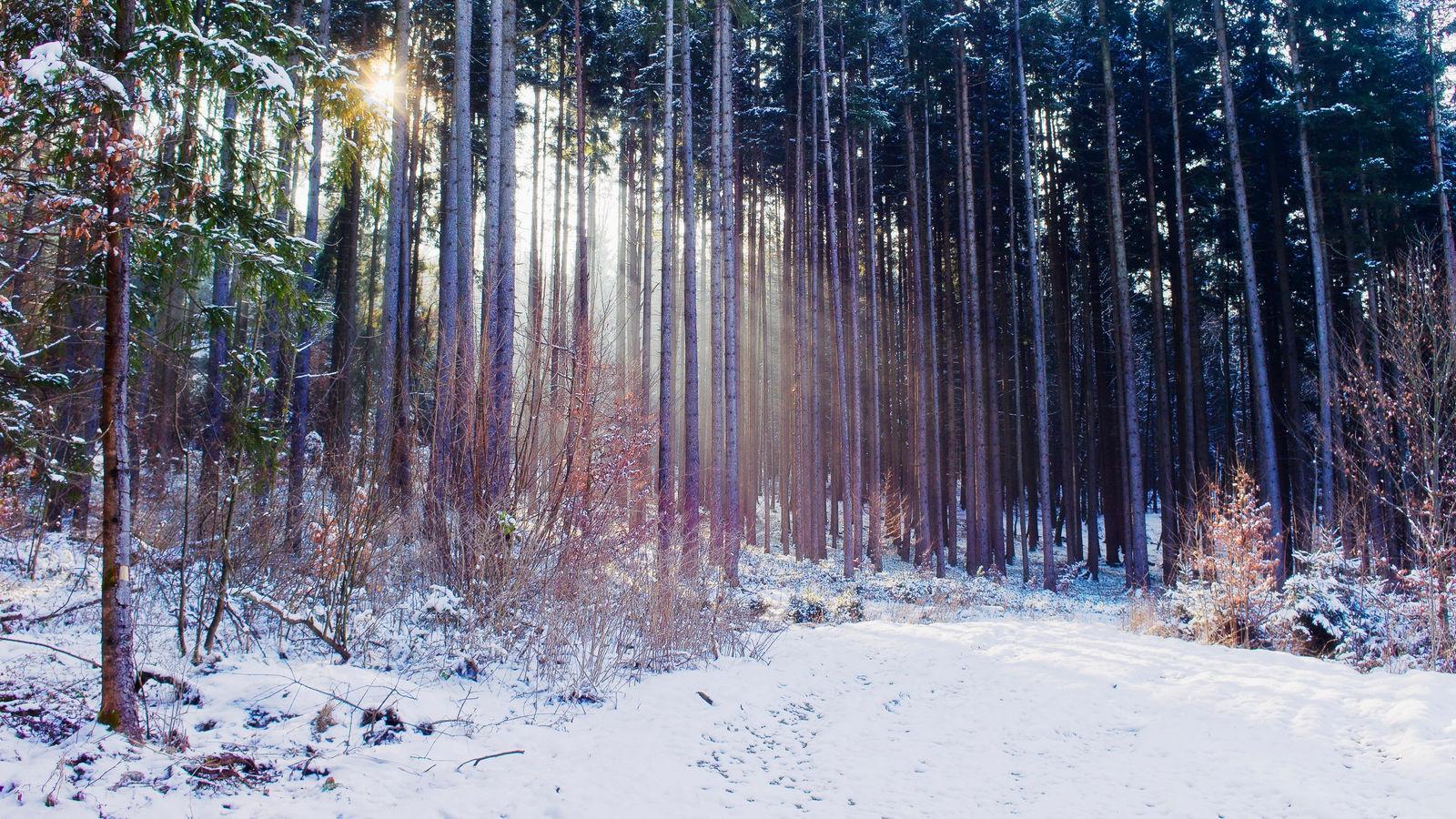 1366x768 Обои Зима