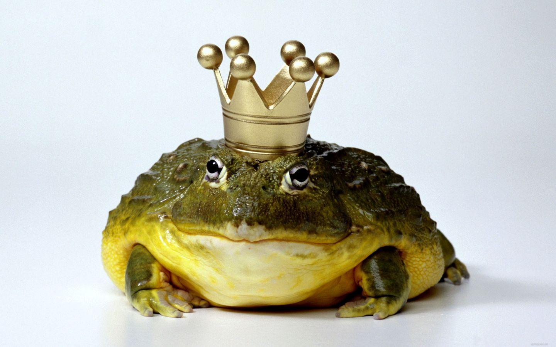 Значение сна про жабу