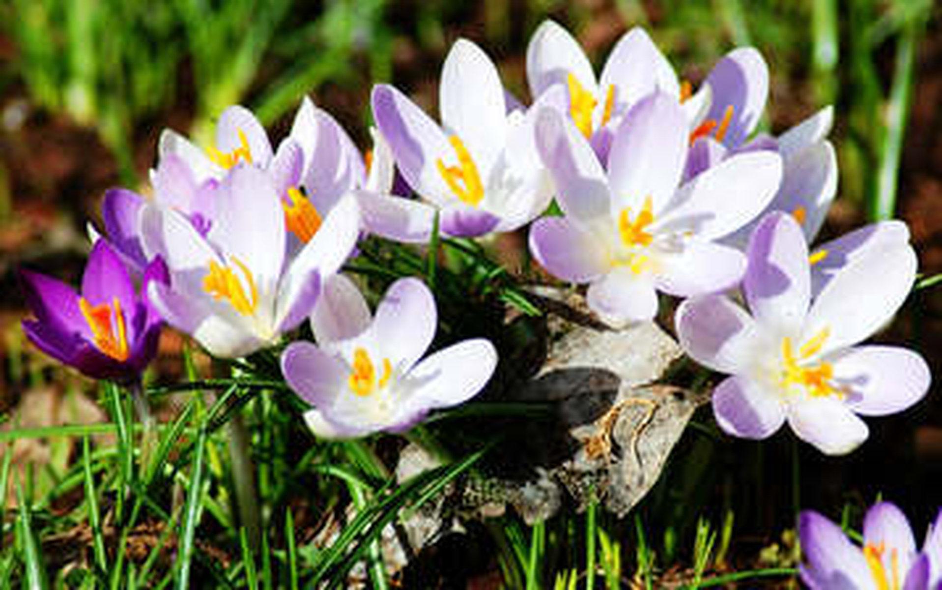 Фото о весне цветы
