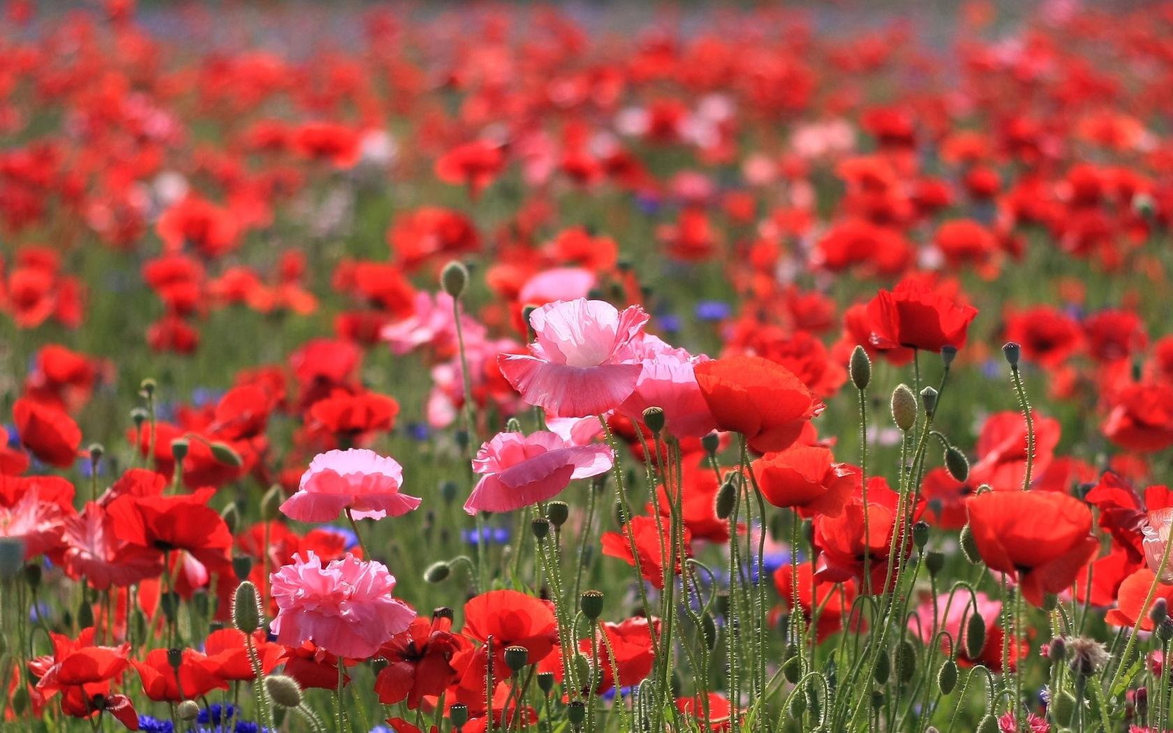 Фото летние цветы в природе 67