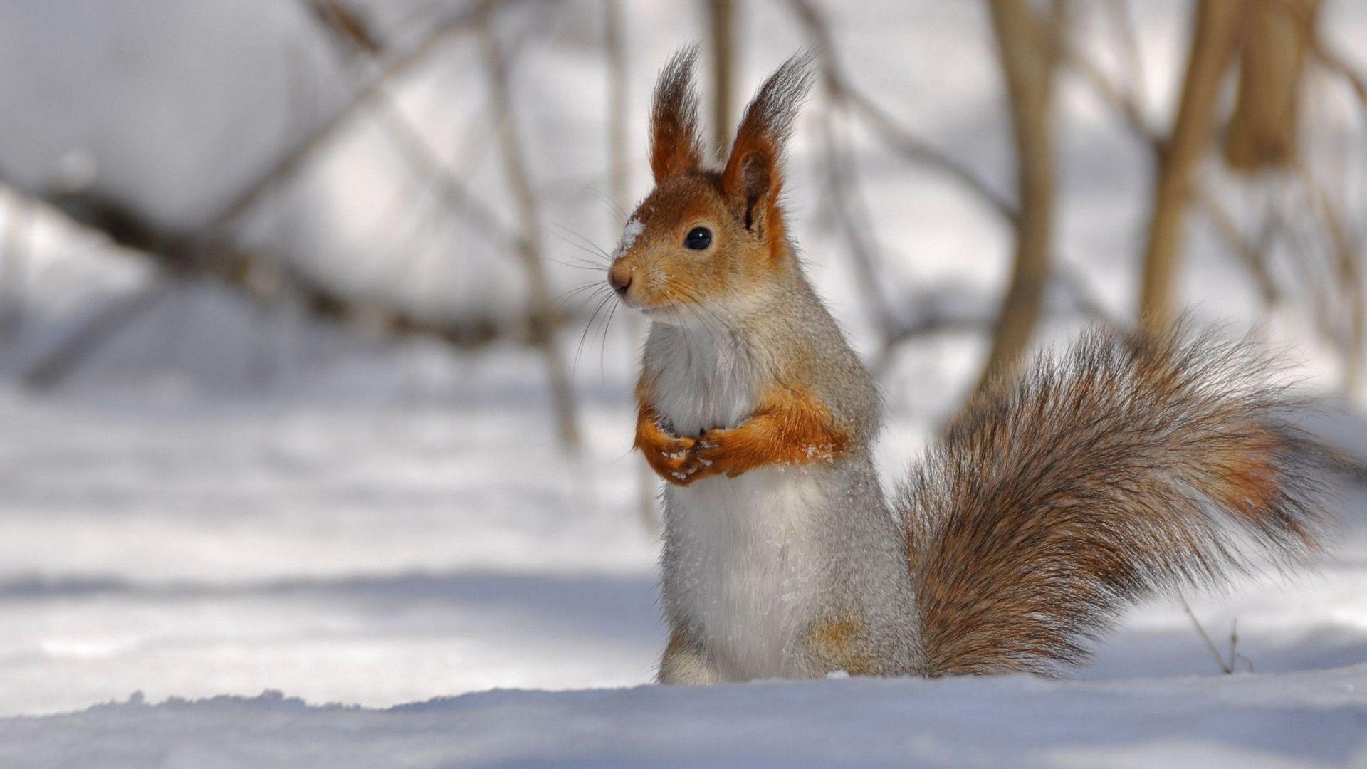 Картинки животных зима чтобы скачивались