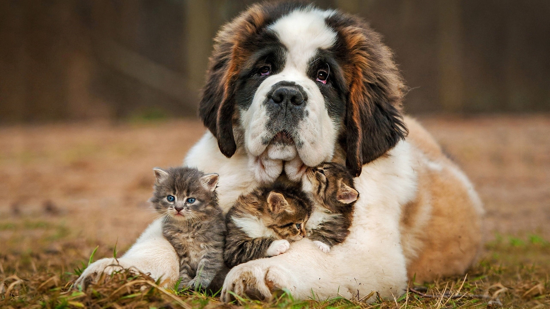 Обои На Рабочий Стол Большие Собаки