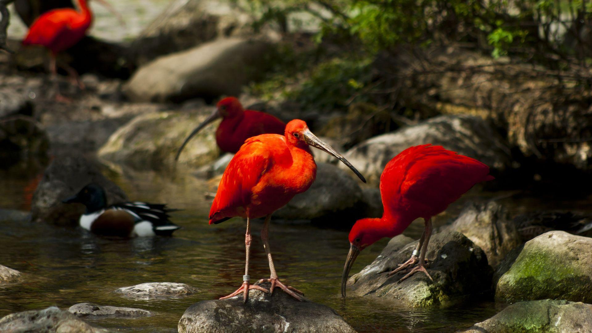 Картинки природы экзотических страница