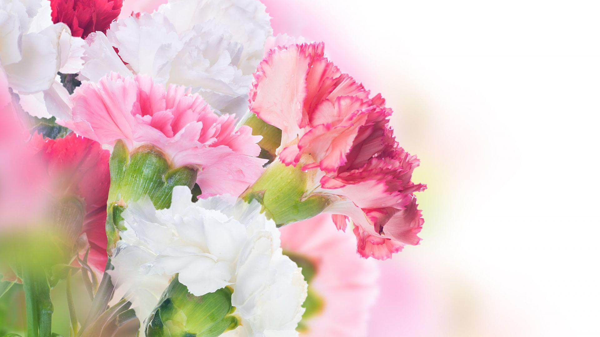 061b8a65af0 Обои цветы 1920x1080 на рабочий стол