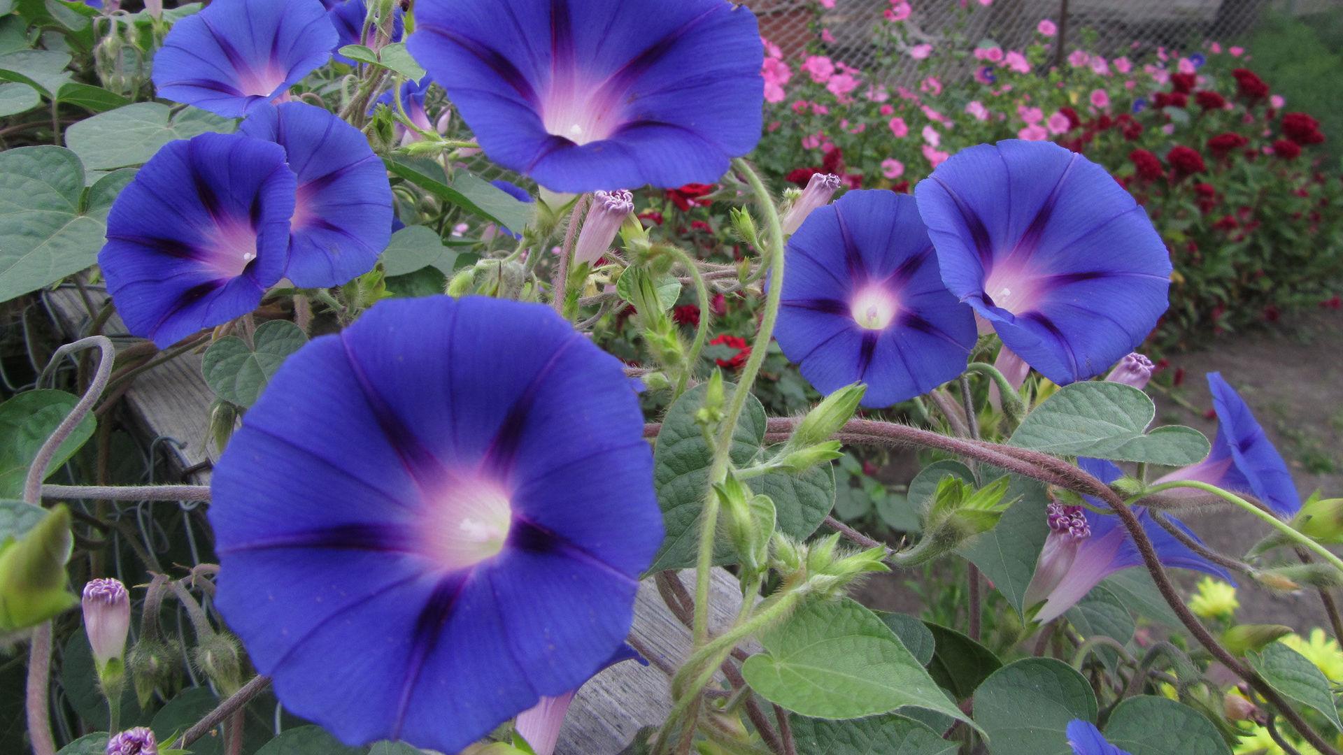 скачать фото высокого качества цветы