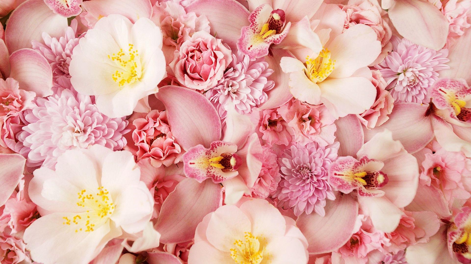 цветы картинки на заставку