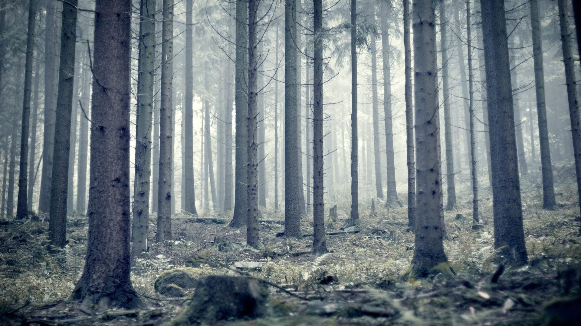 Фото природа высокого качества зима