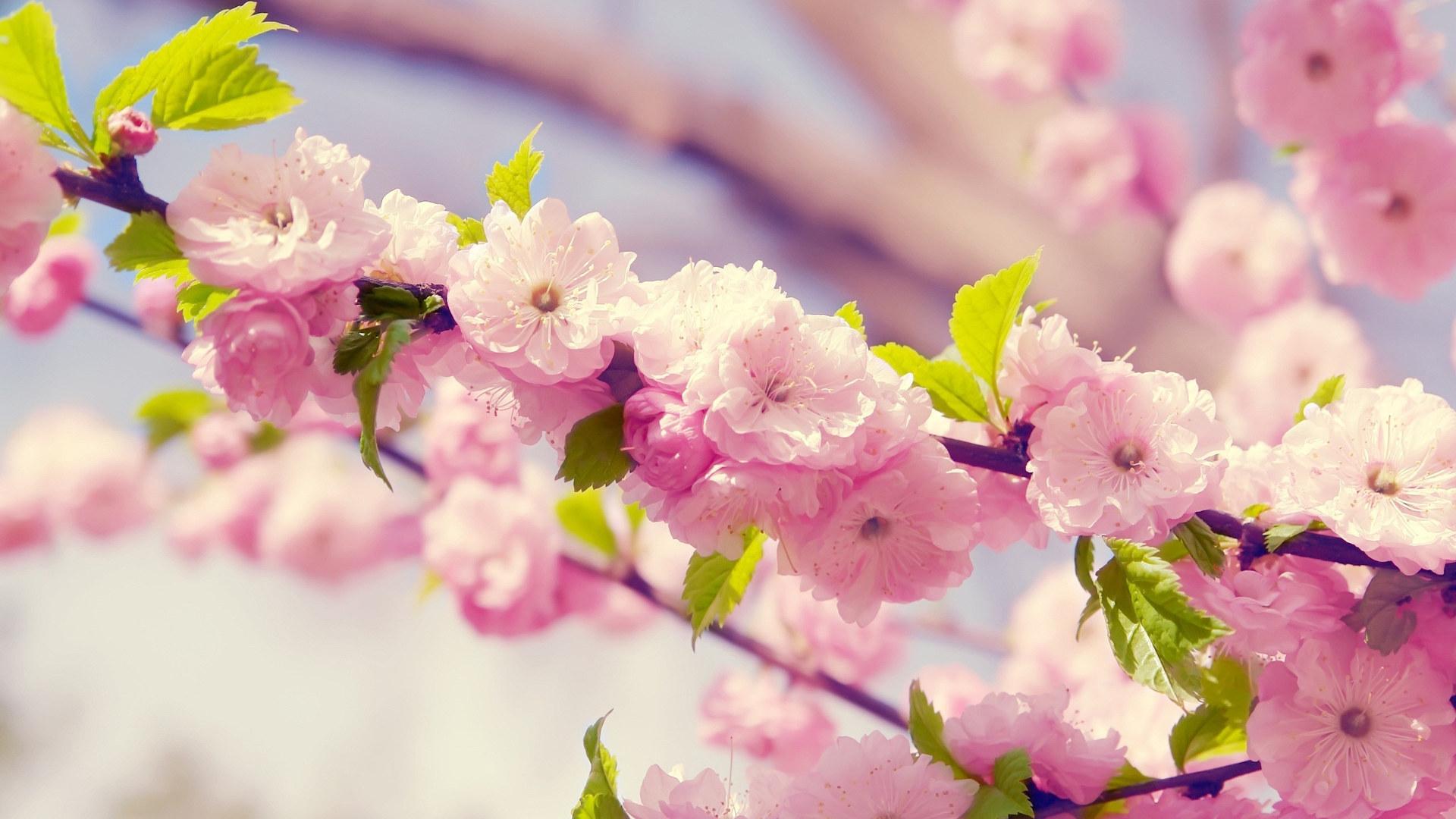Обои цветы, широкоформатные. Природа foto 12