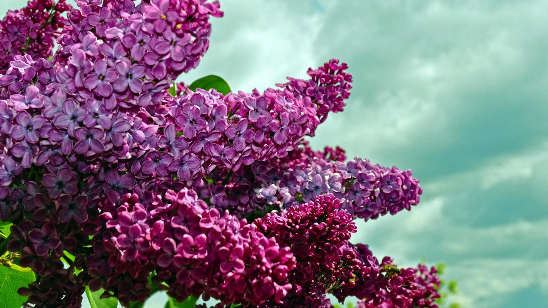 лучшие картинки весны на рабочий стол