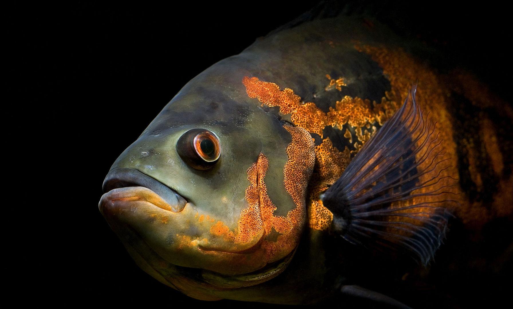 Картинки Рыб На Рабочий Стол