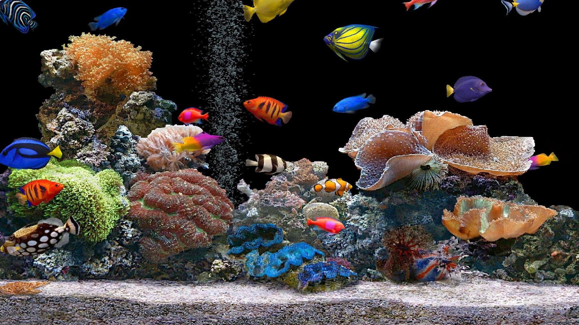 рыбы картинки на рабочий стол