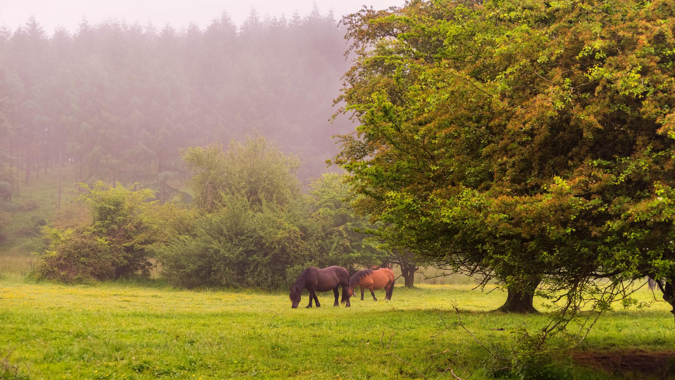 Обои Весна, пейзаж с лошадью. Скачать обои на рабочий стол Природа | 1440x2560