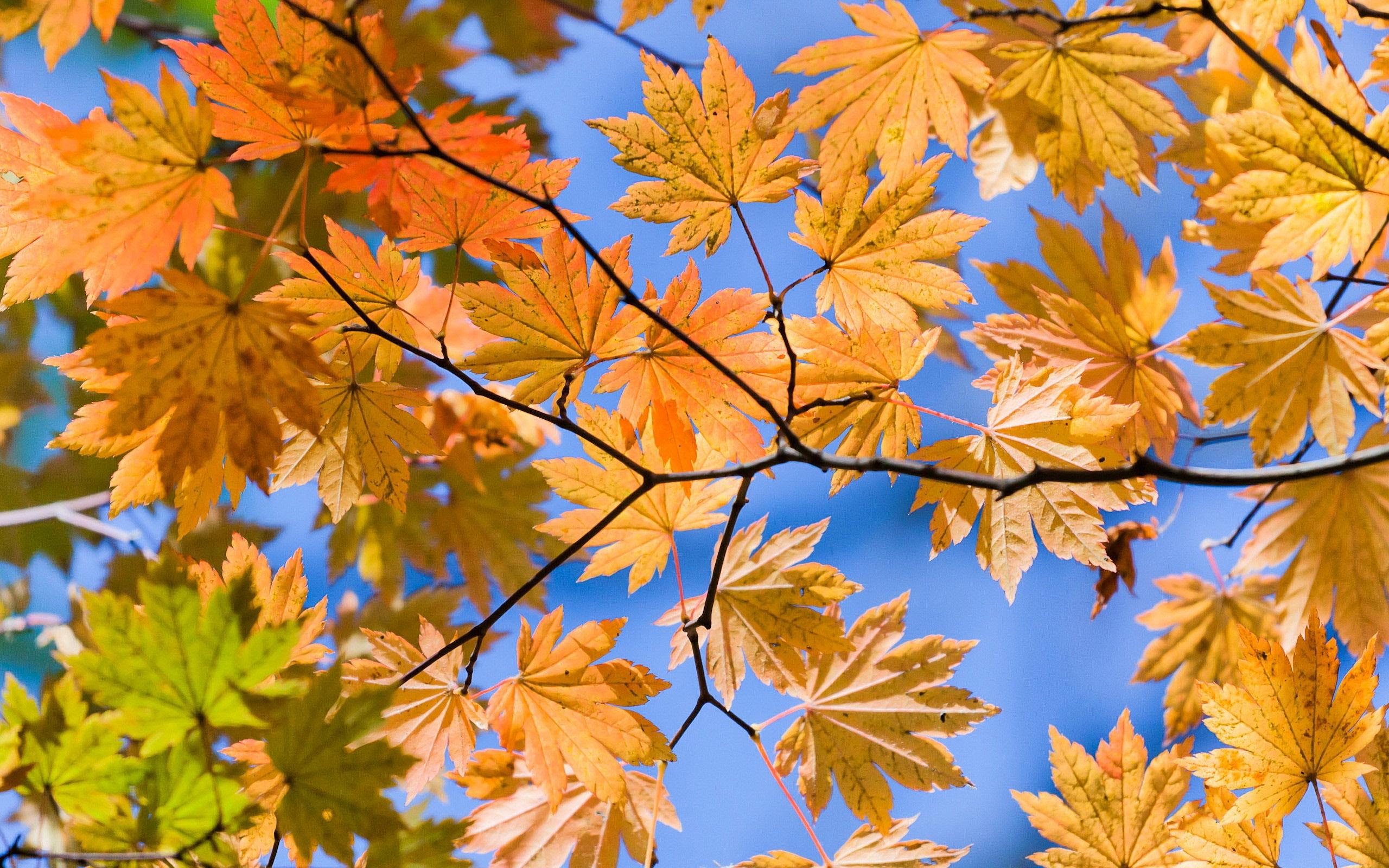 скачать картинки с осенью