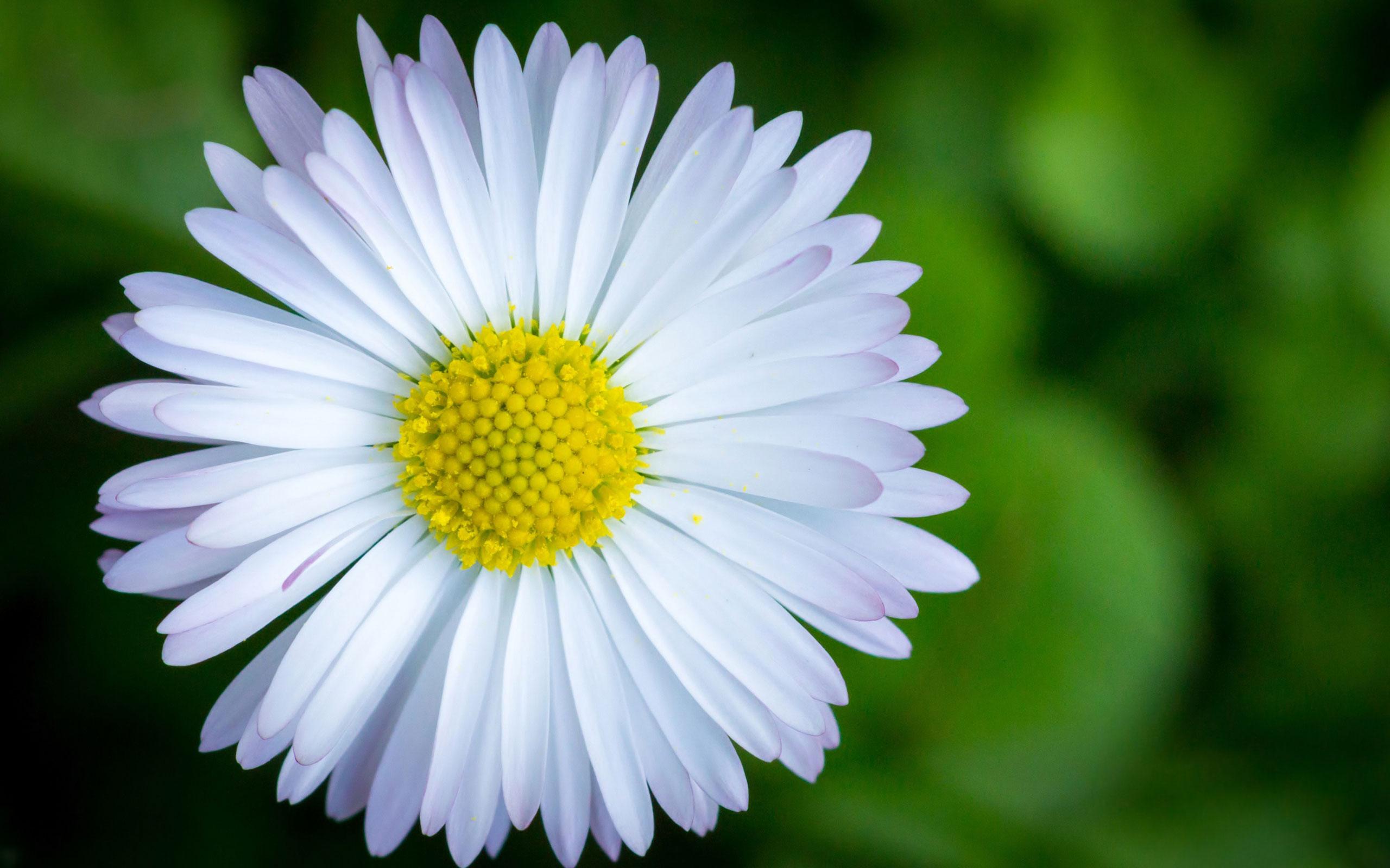 картинки цветы обои цветы