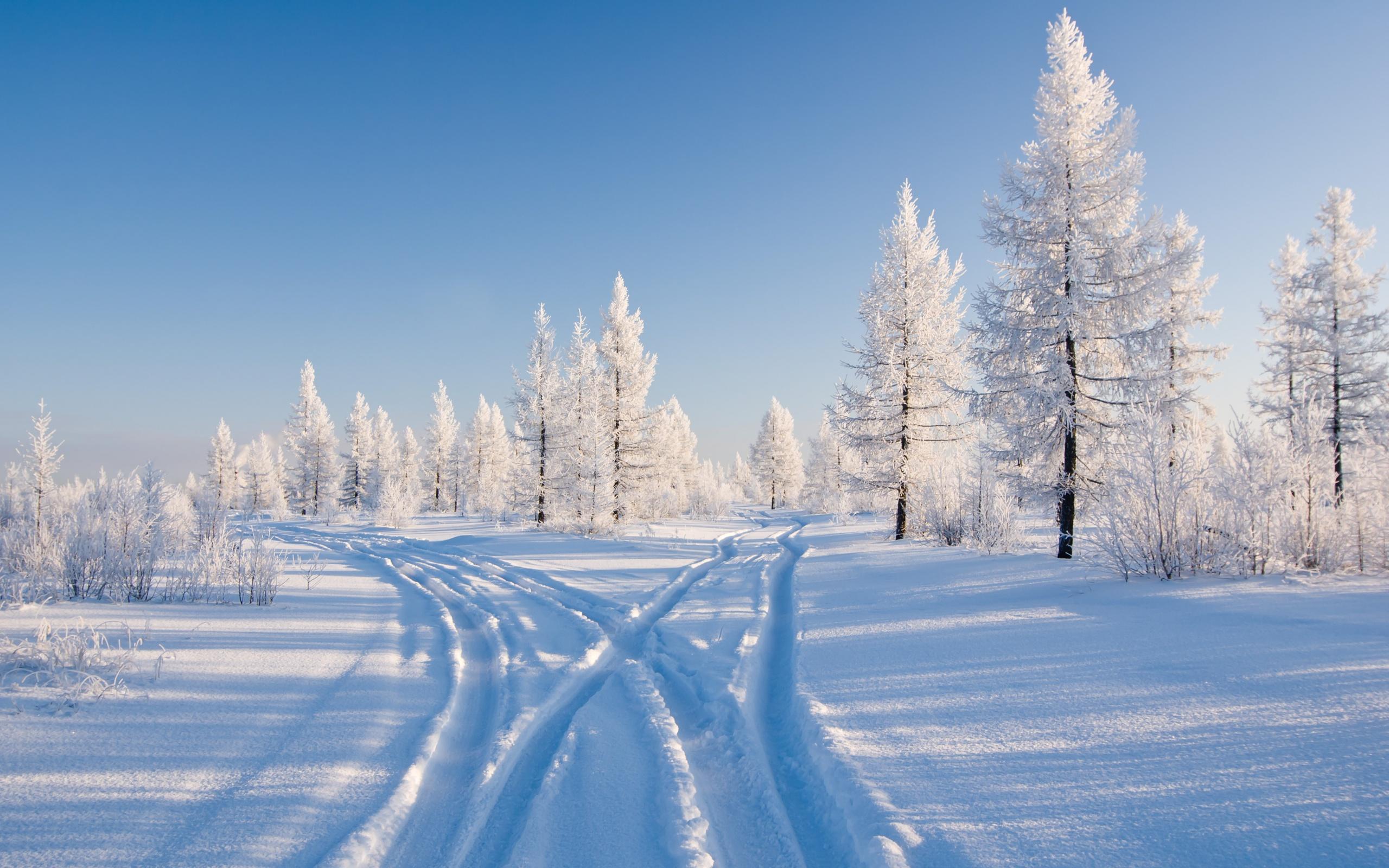 в высоком лес качестве зимний фото