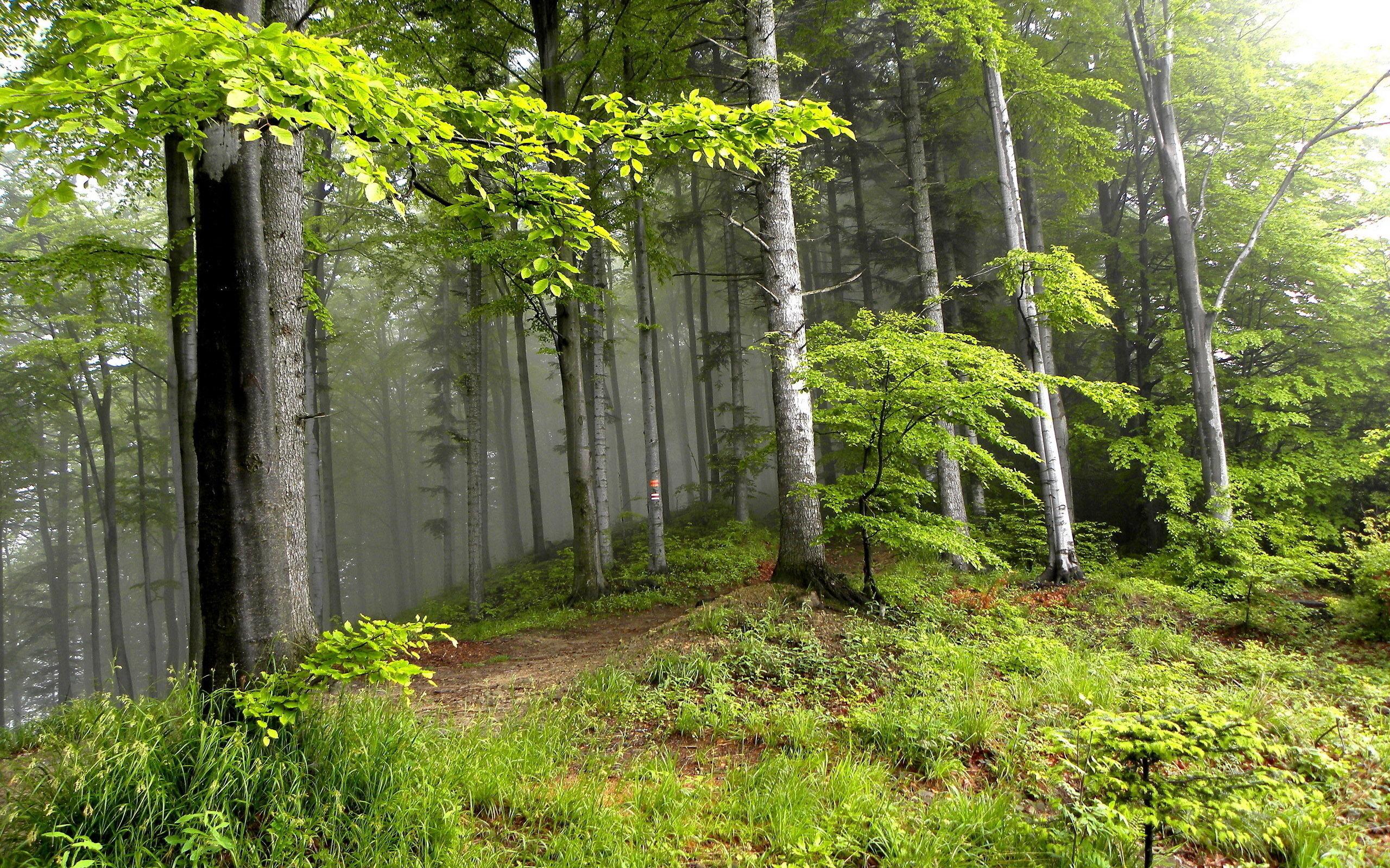 Широкоформатные обои hd лес 1920x1080 картинки фото hd обои.