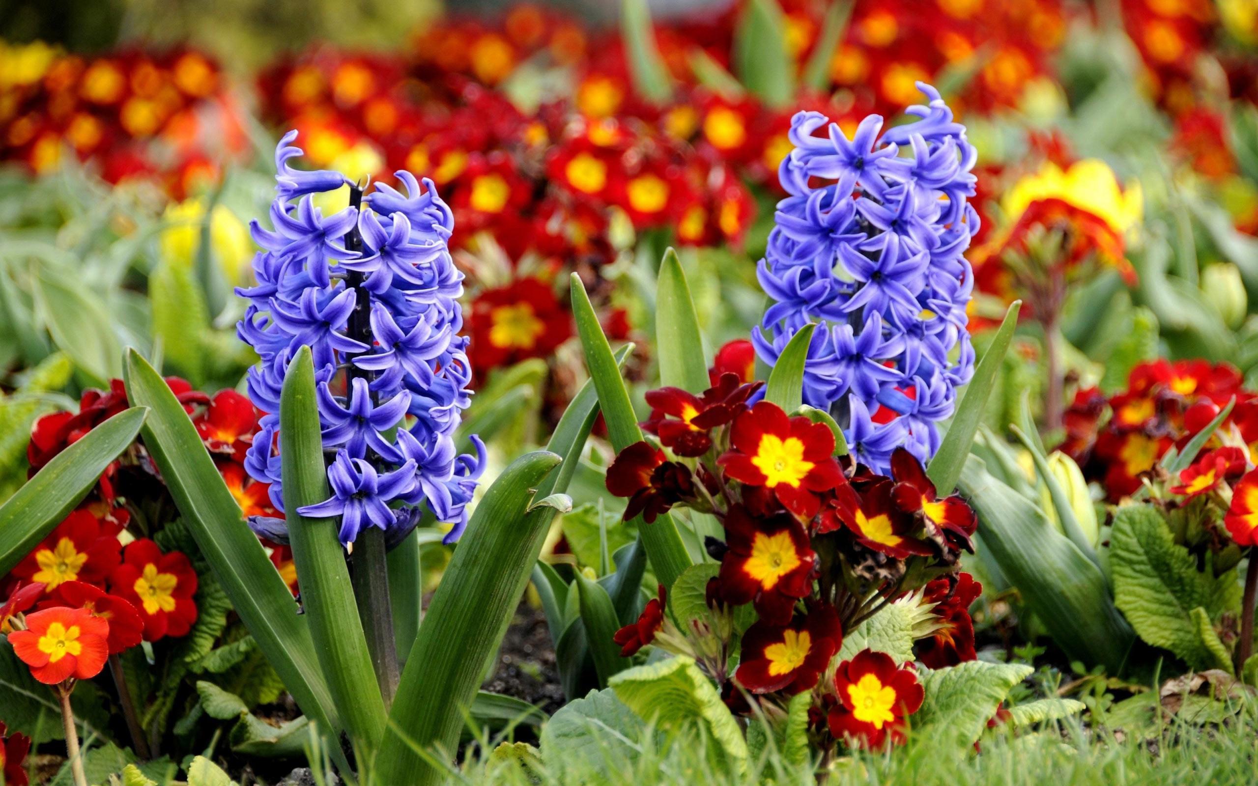 Фото красивые виды цветов