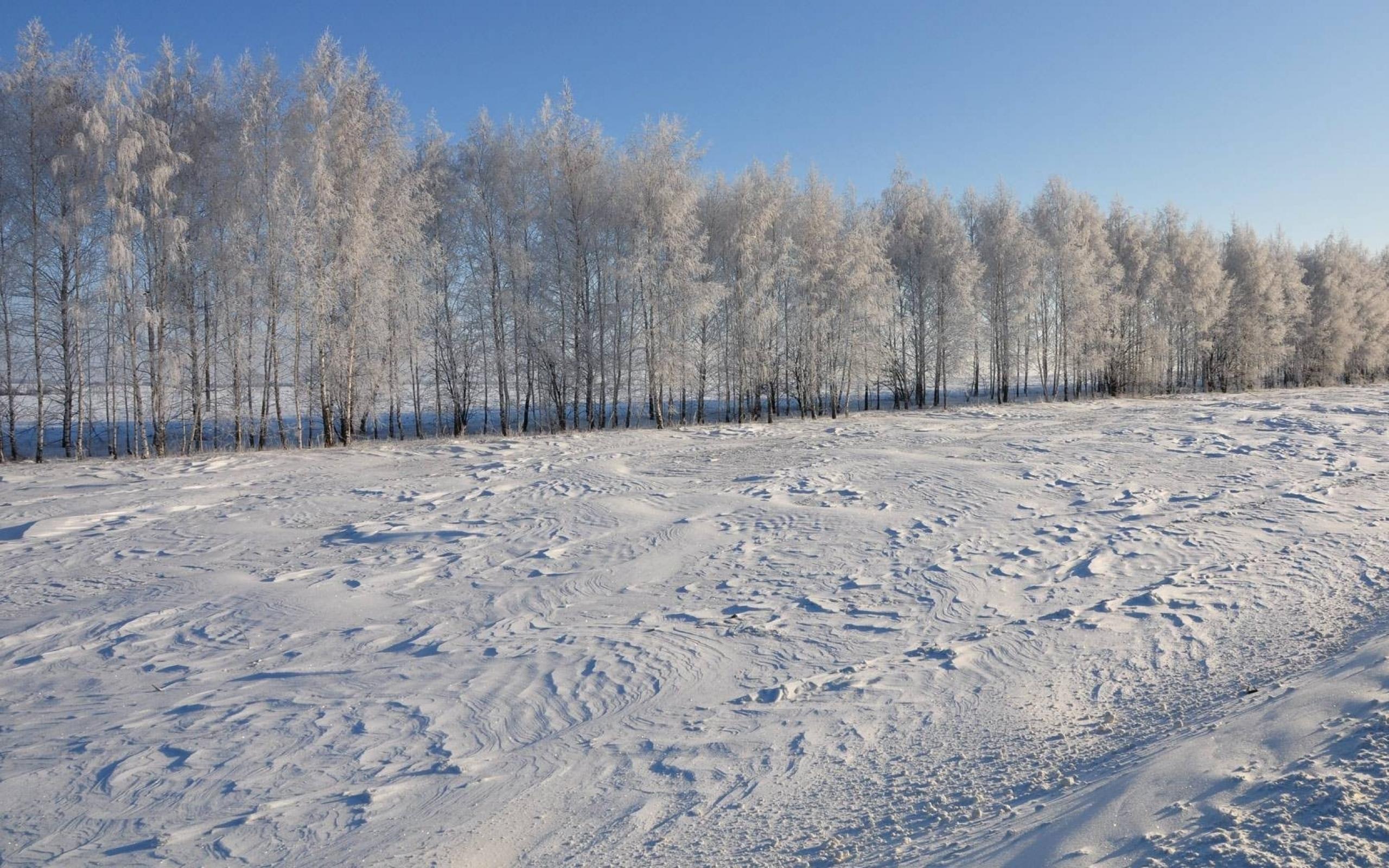 Shirokoformatnye Oboi Zima 2560x1600 Sneg Park Zimnij Les Zimnij
