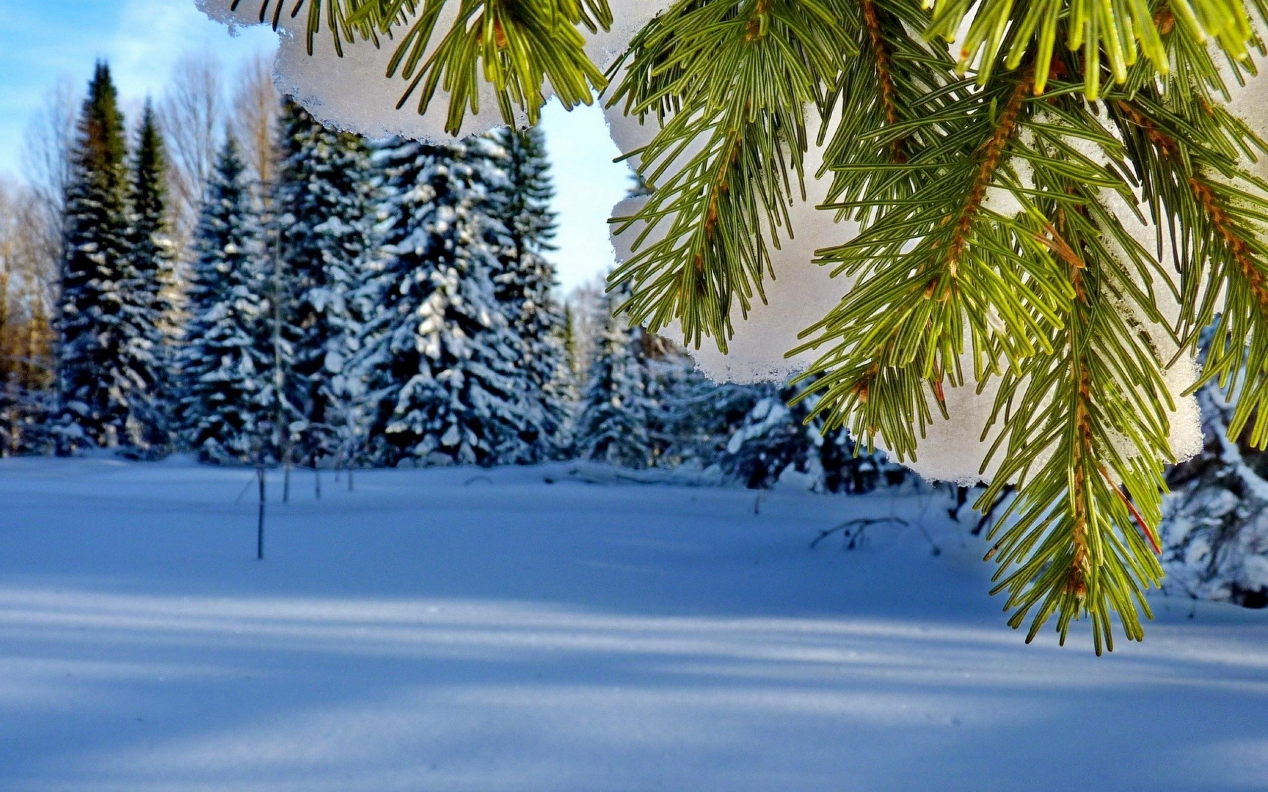 Фото Обои На Телефон Зима