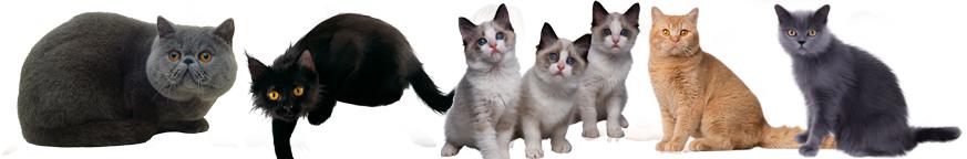 Кошки ,котята, коты.