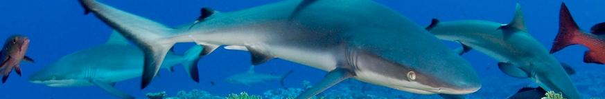 Акулы, рыбы, киты, дельфины.