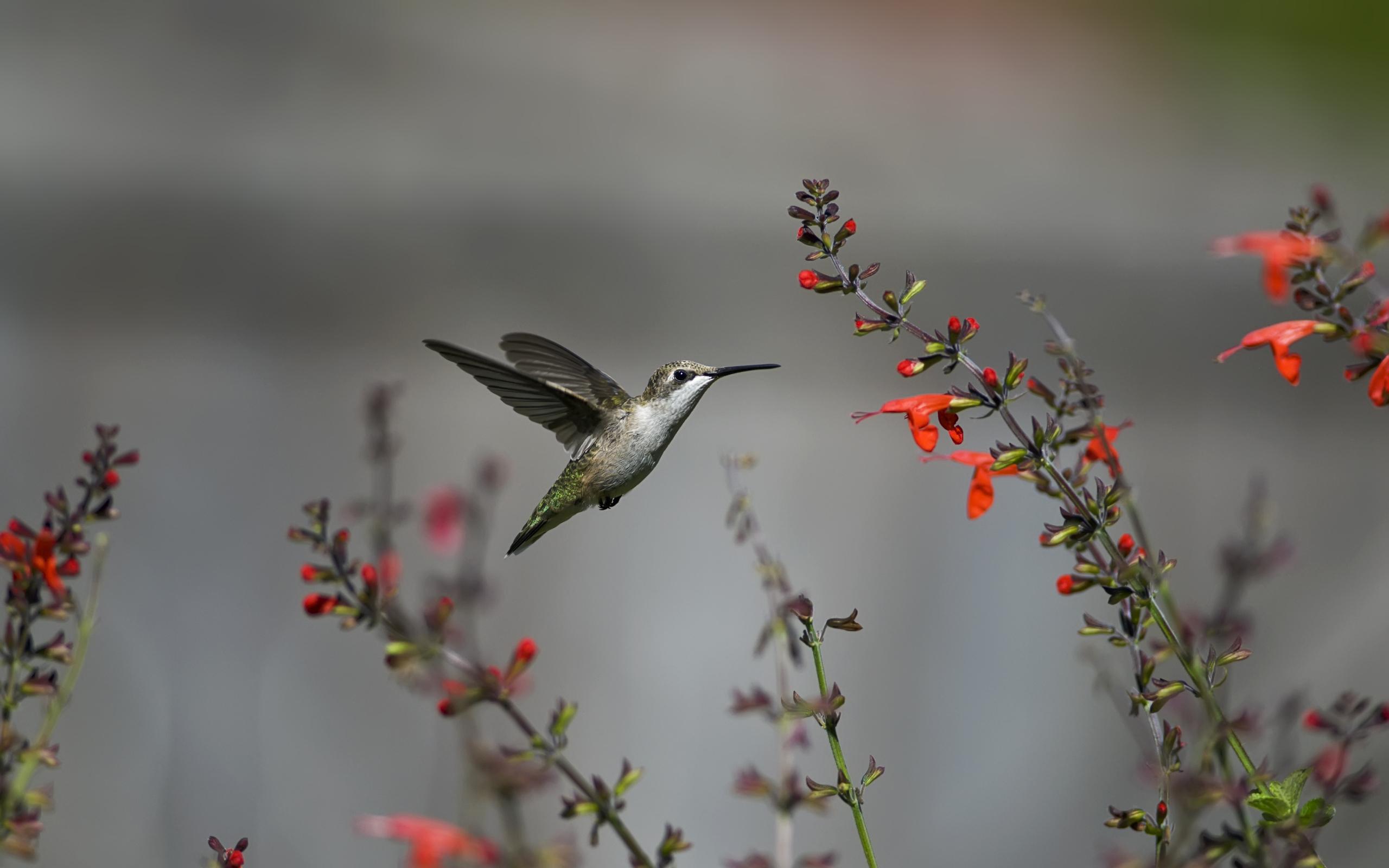 Обои цветы, птицы мира, красиво. Животные foto 12