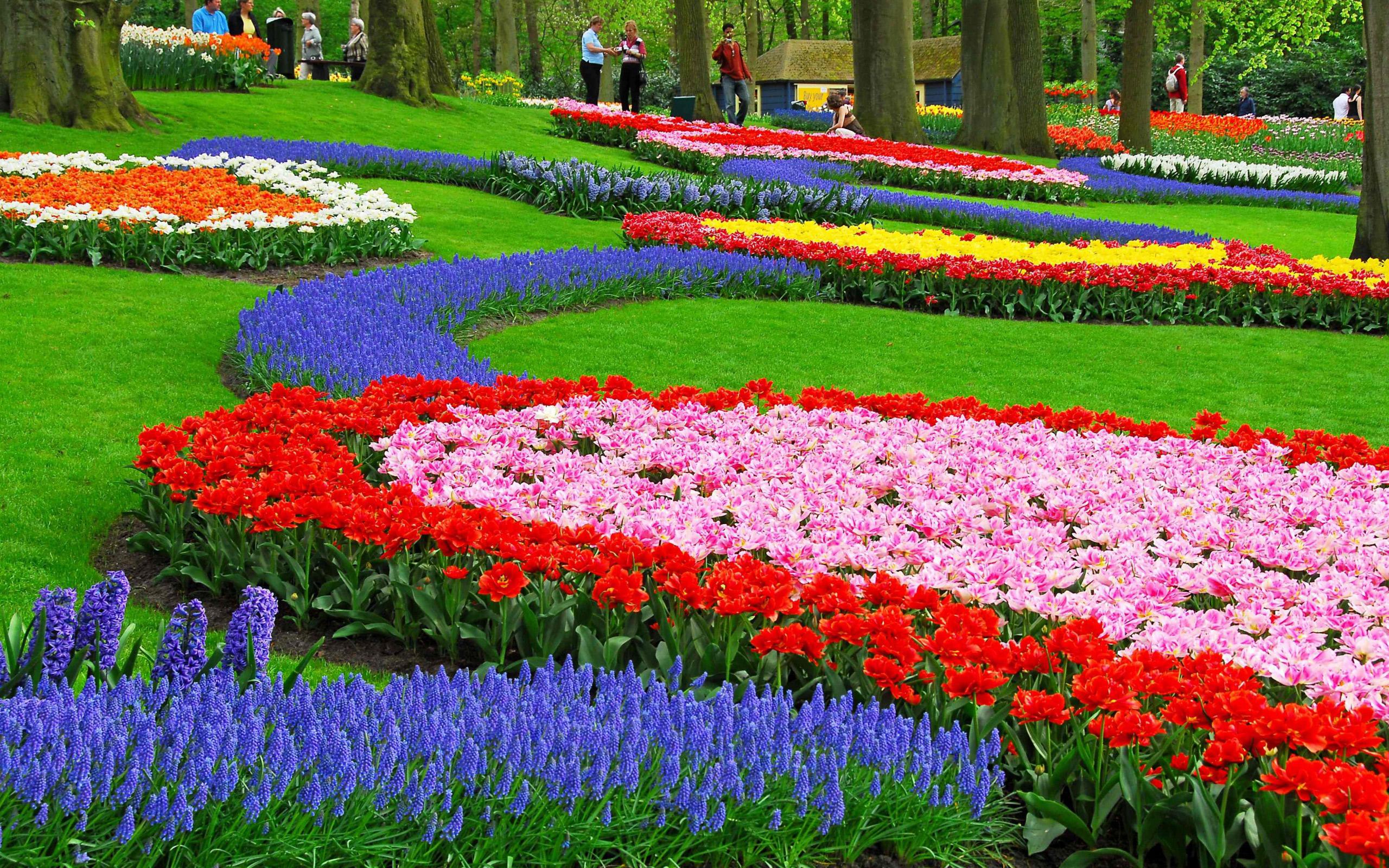 84105de148b Широкоформатные обои цветы для рабочего стола скачать бесплатно высокого  качества.