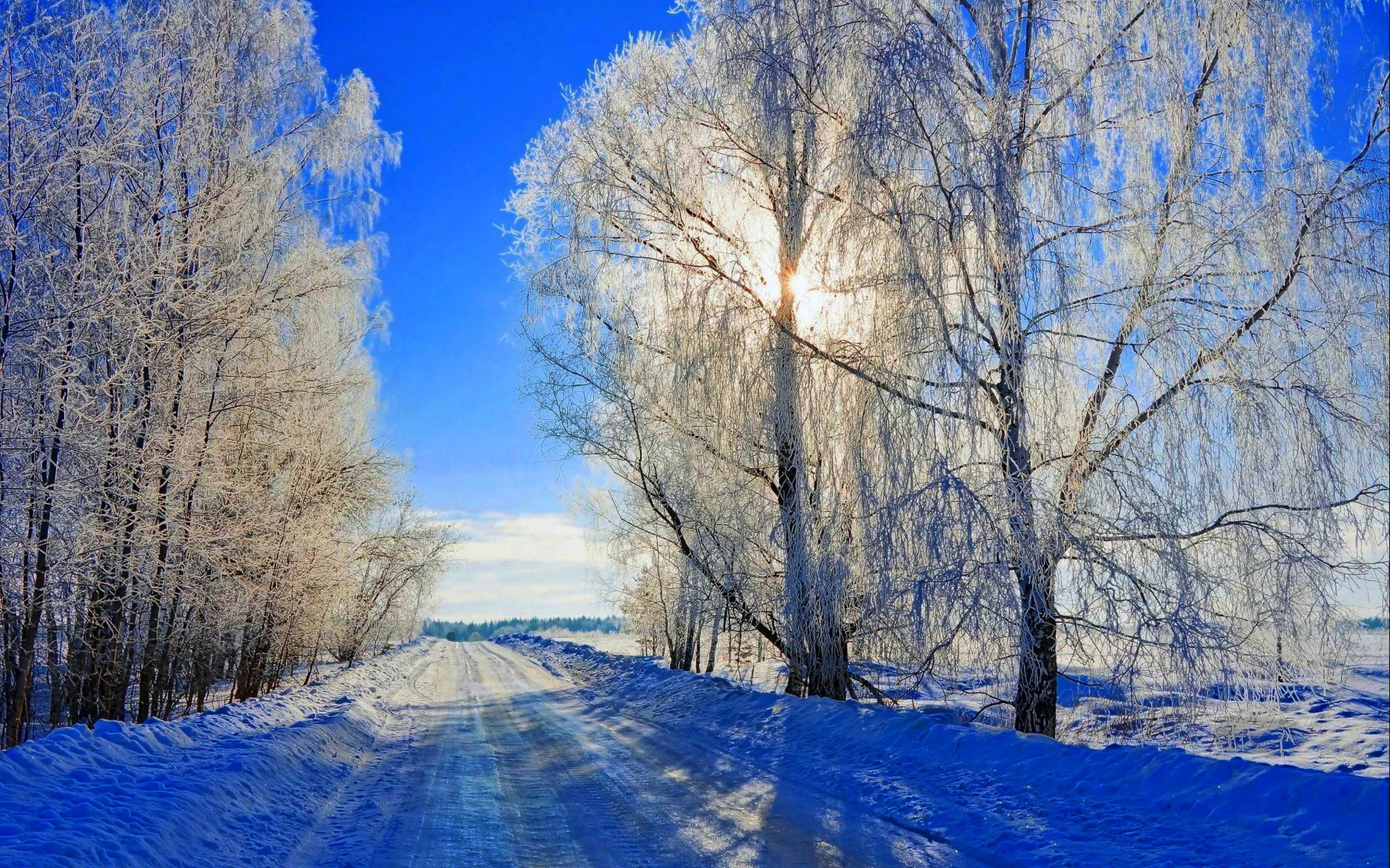 фото лесных пейзажей высокого разрешения
